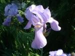 flowers pearls etc 001