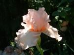 flowers pearls etc 002